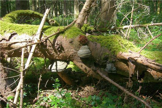Tiefe Einblicke in die Vielfalt des Waldes